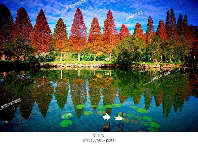 peaceful nature beauty