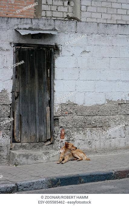 Old Door in a Wall with a Stray Dog