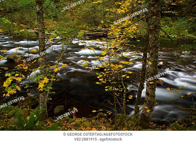 Clackamas Wild and Scenic River, West Cascades Scenic Byway, Mt Hood National Forest, Oregon