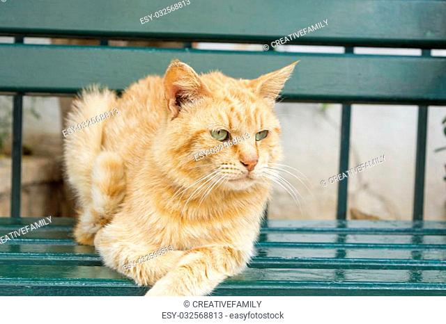Tiger colored green eyes cat sitting on a green bench