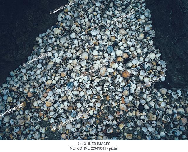 Shells on sand