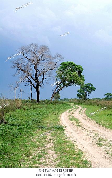 Fazenda San Cristobal, Pantanal landscape, UNESCO World Heritage Site and Biosphere reserve, Mato Grosso, Brazil