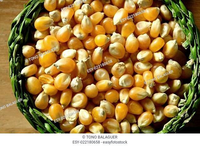 Dried macro corn seeds in orange color