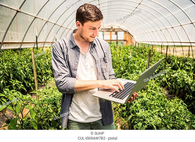 Man in polytunnel using laptop