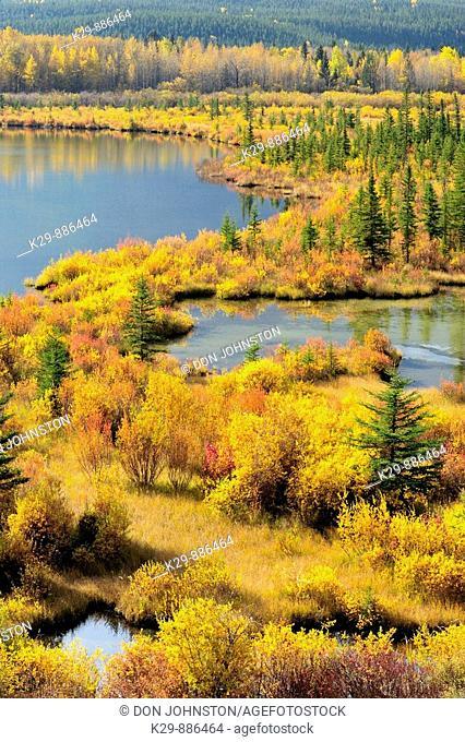 Autumn colours on wetland vegetation at the Vermilion Ponds