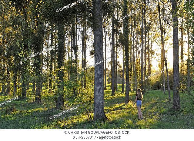young girl wandering in poplar grove, Eure Valley, Eure-et-Loir department, Centre-Val de Loire region, France, Europe