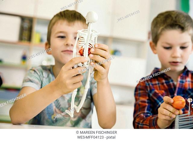 Boy holding anatomical model in kindergarten