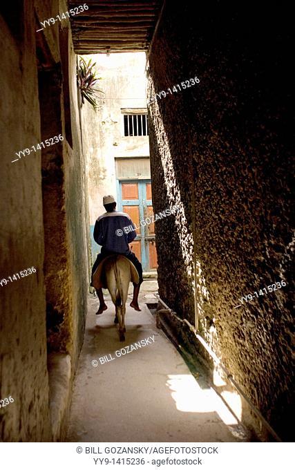 Man riding donkey down narrow streets of Lamu town - Lamu Island, Kenya