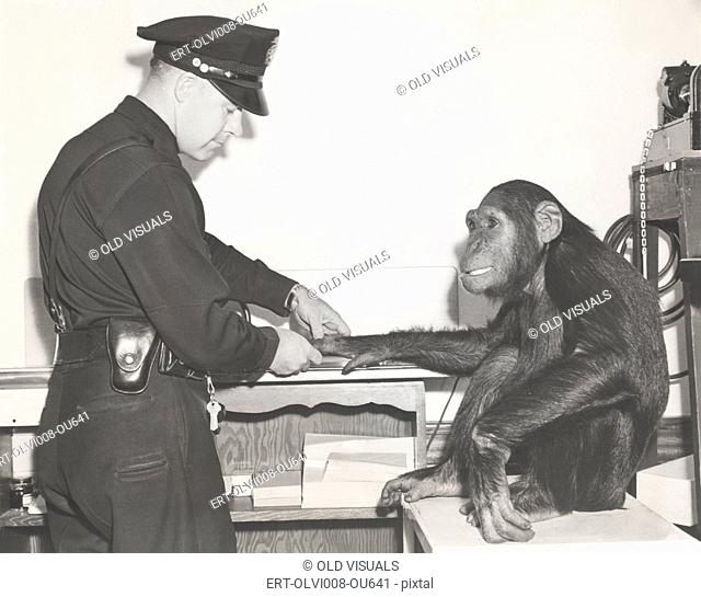 Monkey fingerprinted by police officer