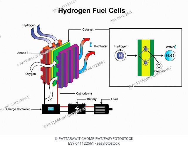 Hydrogen fuel cells diagram