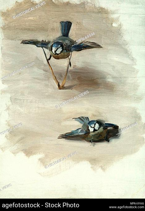 Studies of a Dead Bird. Artist: John Singer Sargent (American, Florence 1856-1925 London); Date: 1878; Medium: Oil on canvas; Dimensions: 20 x 15 in