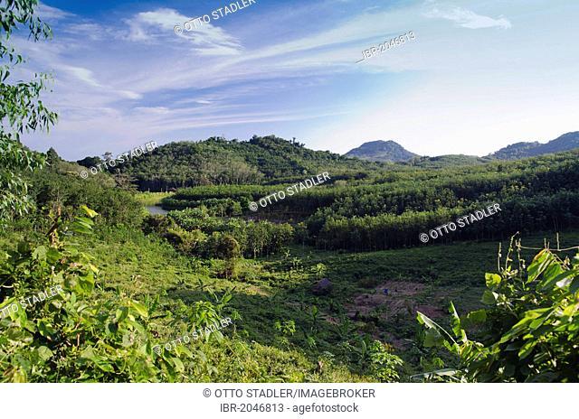Agriculture on the island of Koh Yao Noi, Phang Nga, Thailand, Southeast Asia