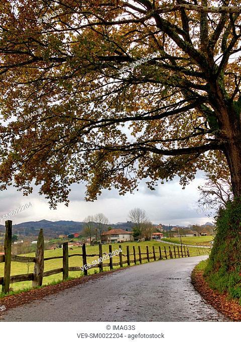 Local road to El Remediu, Nava municipality, Asturias, Spain