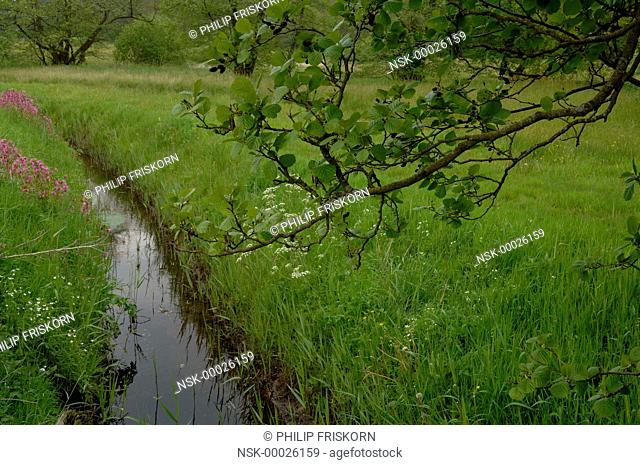 The valleys of the brooks in the National Parc Drentsche Aa are flowering during spring, The Netherlands, Drenthe, National Parc Drentsche Aa