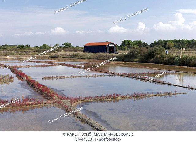 Salt marshes, Port des Salines, open air museum, Ile d'Oleron, Charente-Maritime, France