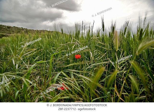 Monegros spring. Aragon. Spain