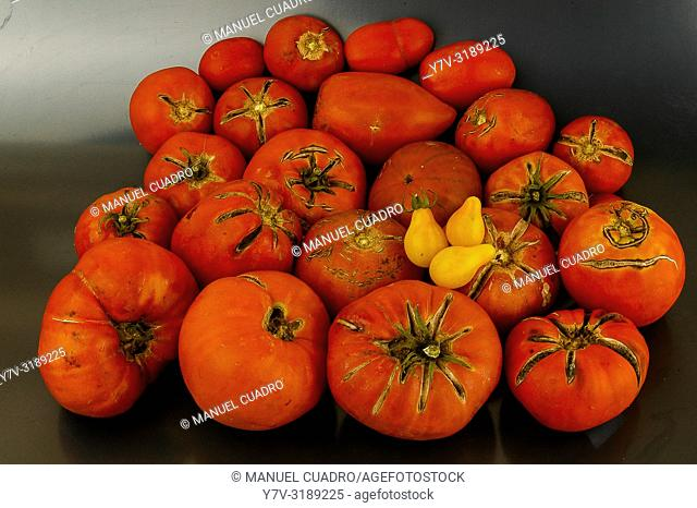 Assortment of tomatoes of different varieties. Spain