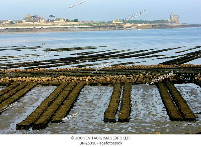 FRA, France, Normandy: Oyster farm of St. Vaast la Hougue. Behind, the island of Tatihou