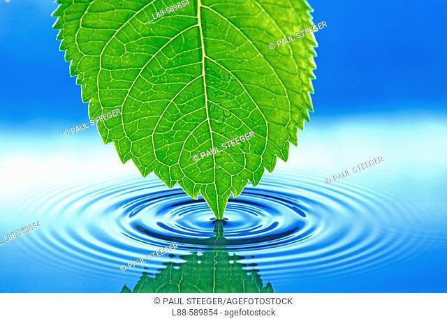 Water, Waterdrop, Water drop
