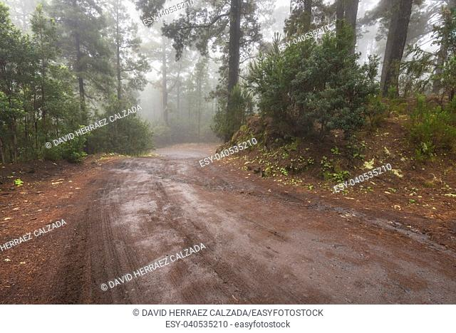 Beautiful foggy forest in Arenas Negras, Tenerife, Canary islands, Spain