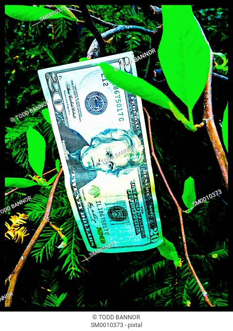 U.S. Twenty dollar bill hanging from tree