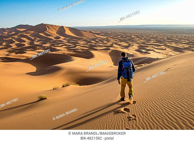 Young man walks on a sand dune, dune landscape Erg Chebbi, Merzouga, Sahara, Morocco