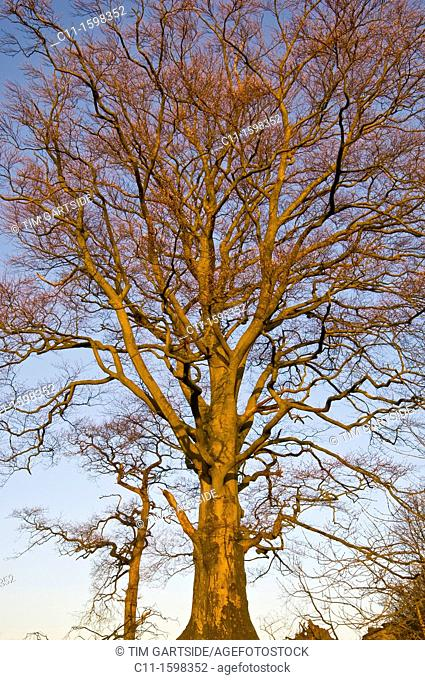 tree wintertime no leaves lake district cumbria england uk