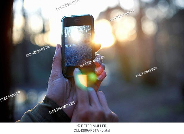 Hands of woman photographing forest on smartphone
