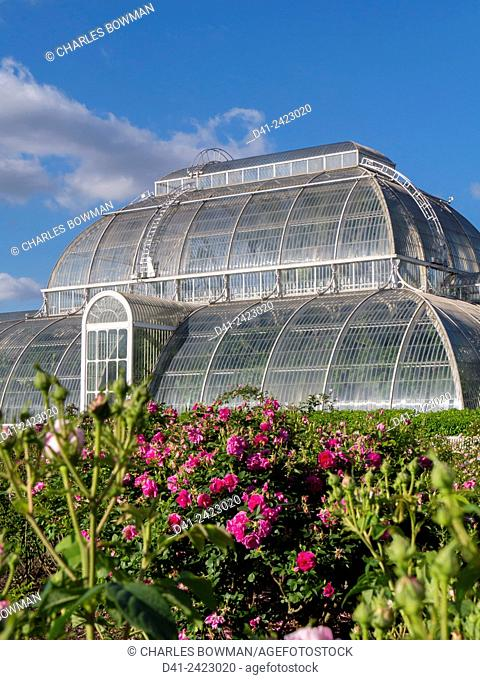 Europe, UK, England, London, Kew Gardens Temperate House summer