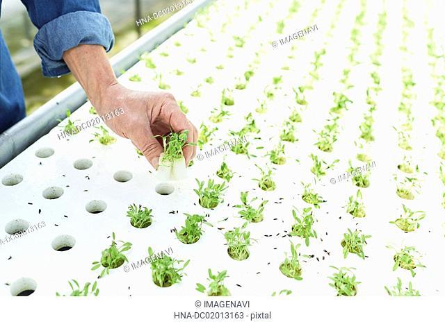 Vegetables for salads