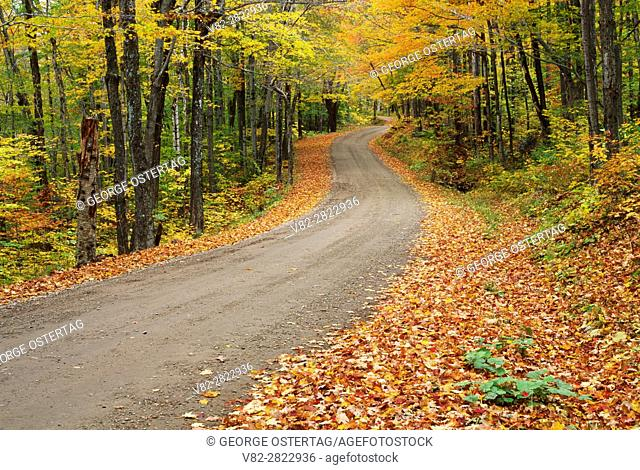 Forest road, White Rocks National Recreation Area, Green Mountain National Forest, Vermont