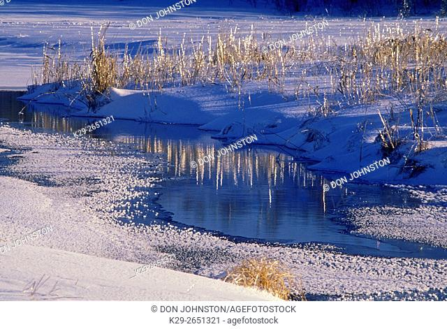 Ice coated marsh grasses at Robinson Lake after winter ice storm, Sudbury, Ontario, Canada