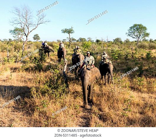 Tourists on Elephant safari to see Victoria Falls on Zambian side of the waterfall