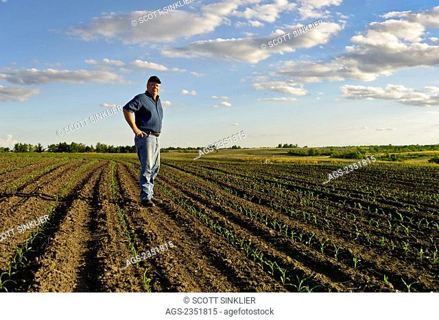 Agriculture - Portrait of a farmer in his early growth grain corn field several weeks after planting / Central Iowa, USA