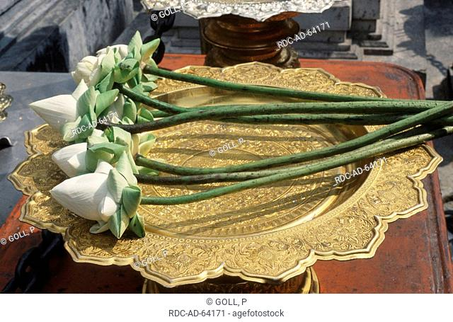 White Lotus flowers as sacrificial offering temple Wat Phra Kaeo Bangkok Thailand Lotos