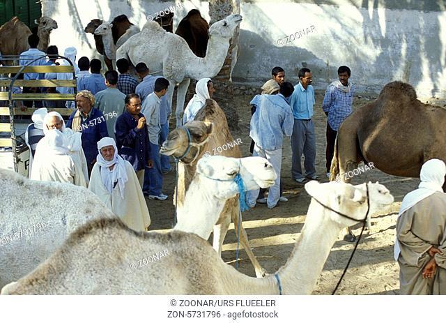 Der Kamel Markt auf dem Dorfplatz in der Altstadt von Douz im Sueden von Tunesien in Nordafrika