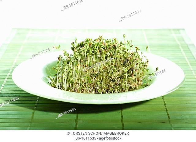 Garden cress