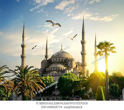 Famous Blue Mosque at sunny summer evening in Istanbul, Turkey
