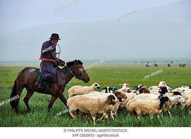 Mongolia, Arkhangai province, nomad camp, sheep herd under the rain