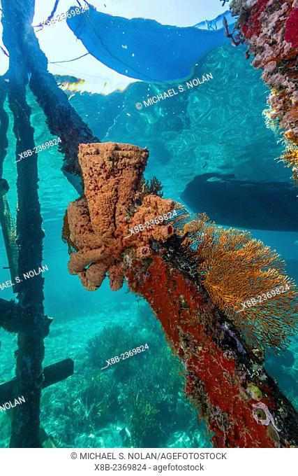 Soft corals cling to the dock on Sebayur Island, Komodo National Park, Indonesia