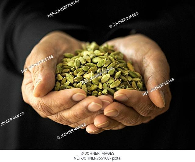 Man holding cardamom seeds, Sweden