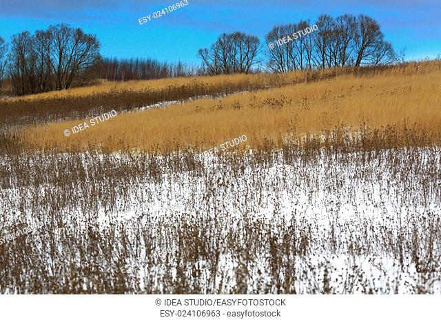 Winter forest tree snow landscape countryside field