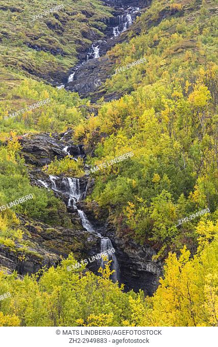 Waterfall surrounded by birch trees in autumn colors in yellow and orange, Abisko, Kiruna county, Swedish Lapland, Sweden