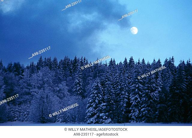 Full moon in the Bavarian Forest National Park. Germany
