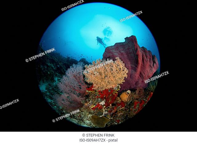 Coral reef scene with dive