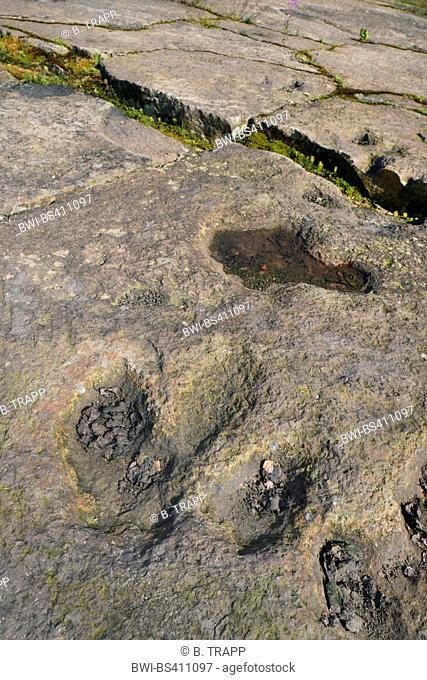 dinosaur footprints on sandstone, Germany, Lower Saxony, Obernkirchener Sandsteinbrueche, Obernkirchen