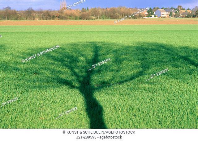 Landscape with cereal seed. North Rhine Westphalia, Germnay