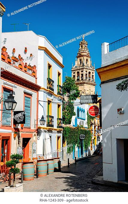 Pedestrian street in the historic centre with the Bell Tower of La Mezquita (Great Mosque) in the background, Cordoba, Andalucia, Spain, Europe
