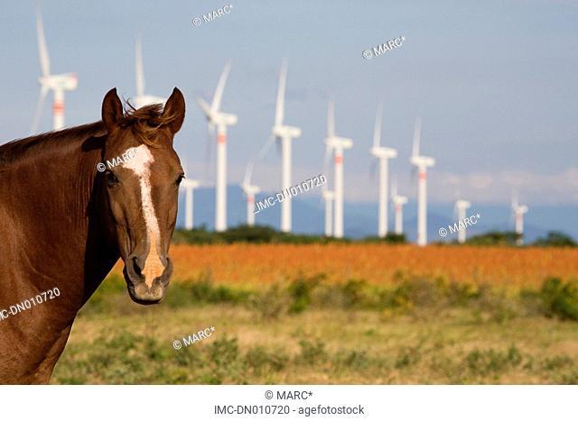 Mexico, valley of Oaxaca, Juchitan de Zaragoza, windmill park and horse
