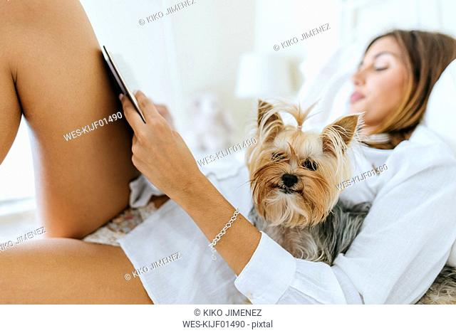 Portrait of Yorkshire Terrier in bed with owner reading a book
